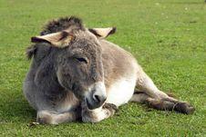 Free Donkey Stock Photo - 26779290