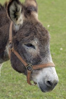 Free Donkey Stock Photos - 26779303