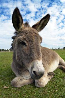 Free Donkey Royalty Free Stock Photos - 26779358