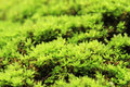Free Green Moss Stock Images - 26781894
