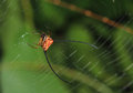 Free Curved Spiny Spider Stock Images - 26781954