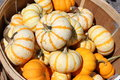 Free Wooden Basket Of Colorful Fall Gourds Stock Photo - 26787710
