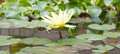Free Beautiful Lotus Flower Royalty Free Stock Photography - 26789117