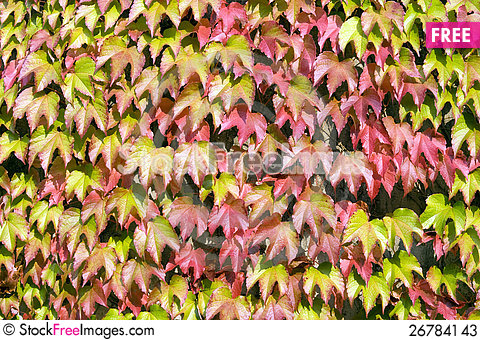 Free Colorful Leaves Stock Photos - 26784143
