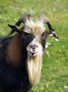 Free Goat Stock Photo - 26780090
