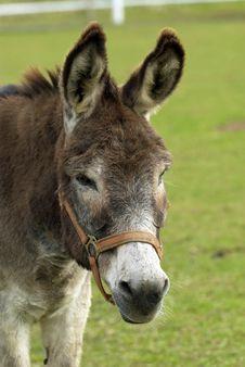Free Donkey Stock Photos - 26780103