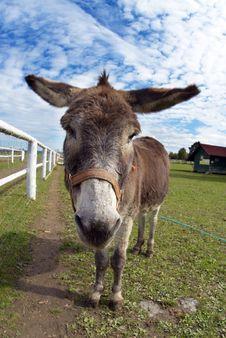 Free Donkey Stock Image - 26780141