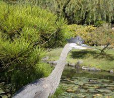 Free Crane In Japanese Garden Royalty Free Stock Photos - 26783998