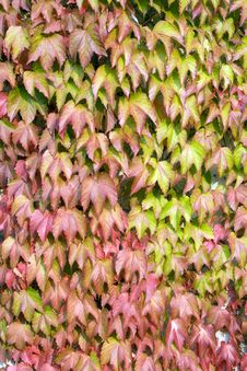 Free Colorful Leaves Royalty Free Stock Image - 26784176