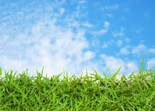 Free Green Grass And Blue Sky Royalty Free Stock Photography - 26784587