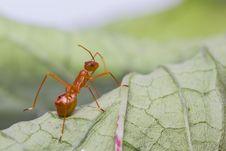 Free Assassin Bug Royalty Free Stock Image - 26785256