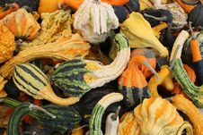 Free Colorful Gathering Of Seasonal Gourds Royalty Free Stock Photos - 26786998