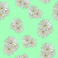 Free Daisies Royalty Free Stock Image - 26788406