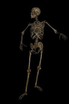 Free Idle Skeleton Stock Photos - 26789743