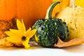 Free Autumn Still-life Stock Image - 26791841