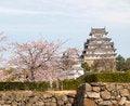 Free Himeji Castle In Cherry Blossom Season Stock Photography - 26792652
