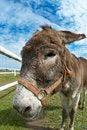 Free Donkey Royalty Free Stock Photo - 26795235