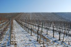 Free Landscape Vineyard In The Winter Stock Photography - 26792672