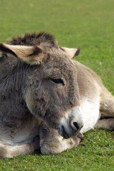 Free Donkey Stock Images - 26795174