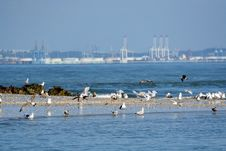 Free Group Of Seagulls Royalty Free Stock Photo - 26795565