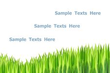 Free Grasses Isolated Royalty Free Stock Photography - 26798987