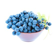 Free Blue Grape Clusters With Leaves Royalty Free Stock Photo - 26799915