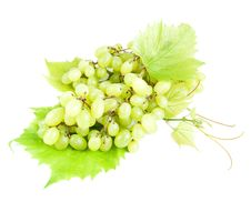 Free Grape Cluster Royalty Free Stock Photography - 26799927
