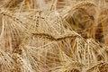 Free Wheat Close-up Stock Image - 2681661