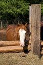 Free Lazy Farm Royalty Free Stock Photo - 2684455