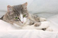 Free Kitty Royalty Free Stock Photography - 2680617