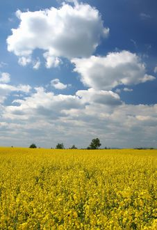 Free Landscape - Yellow Field Stock Photo - 2681450