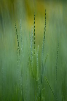 Free Grass In The Summer Royalty Free Stock Photos - 2681818