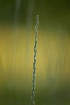Free Grass In The Summer Royalty Free Stock Images - 2681819