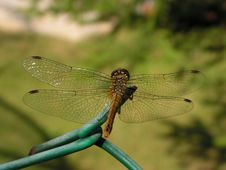 Free Dragonfly Royalty Free Stock Images - 2682349