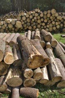 Free Clamps Of Round Timbers Royalty Free Stock Photo - 2682695