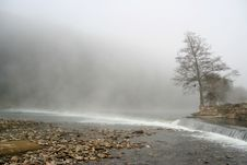 Free Tree With Fog Royalty Free Stock Images - 2683379