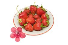 Free Strawberries, Isolated Stock Photos - 2683493