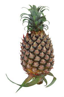 Free Pineapple Royalty Free Stock Photo - 2684385