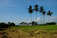 Farm House, Paddy Field Royalty Free Stock Images