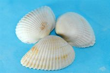 Free Sea Shell On The Table Royalty Free Stock Images - 2684879