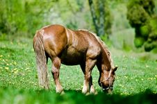 Free Horse At The Meadow Stock Photos - 2685023