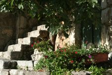 Free Mediterranean Scene Royalty Free Stock Image - 2685146