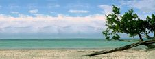 Free Beach With Twisted Tree Royalty Free Stock Photography - 2685967