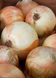 Free Onions Stock Images - 26808984