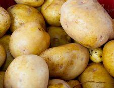 Free Golden Potatoes Stock Image - 26809051