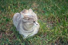 Free Gray Cat On The Autumn Grass Stock Photography - 26809372