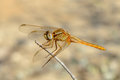Free Dragonfly Stock Photos - 26810163