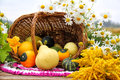 Free Still Life With Assorted Gourds Royalty Free Stock Image - 26811536