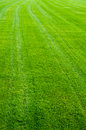 Free Green Grass Texture Royalty Free Stock Image - 26812886