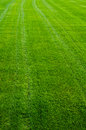Free Green Grass Texture Stock Photo - 26812890